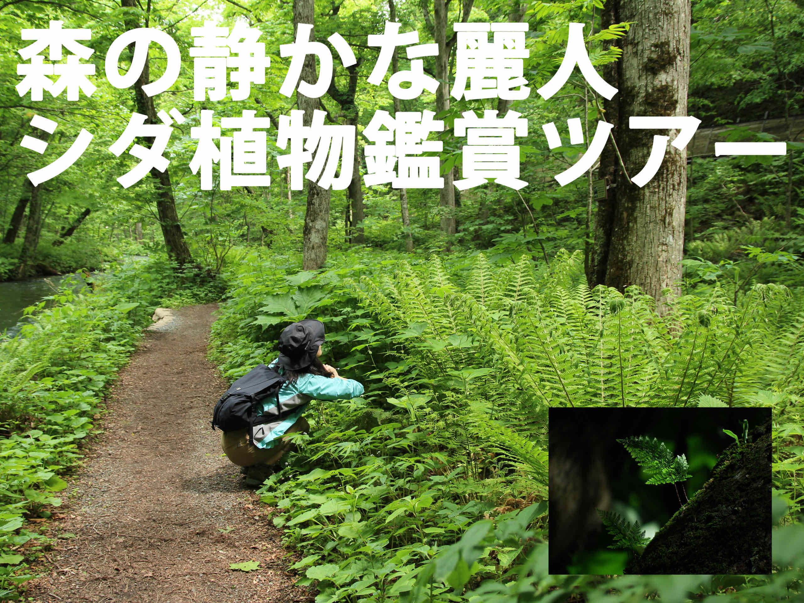 森の静かな麗人<br>シダ植物鑑賞ツアー