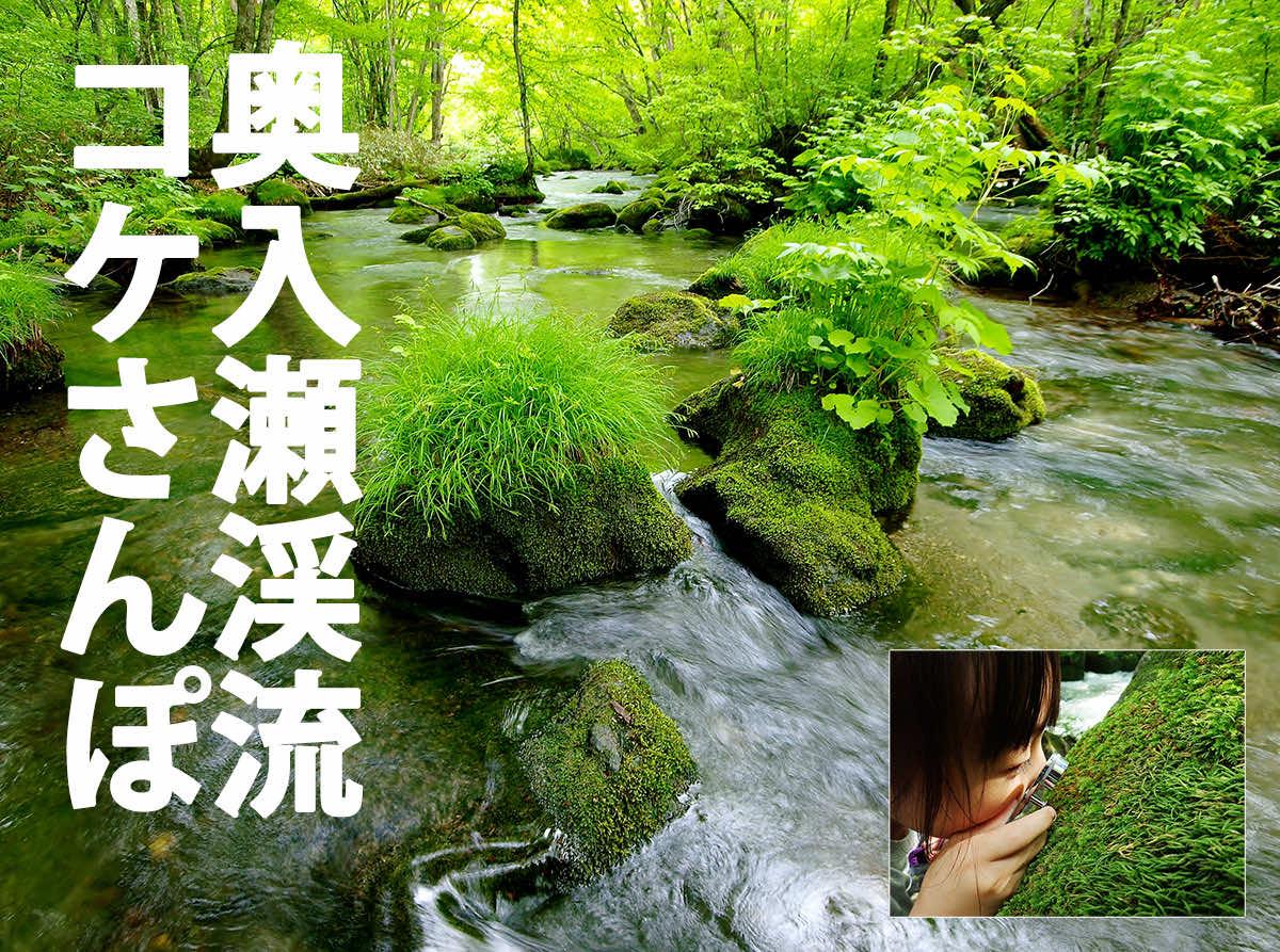 奥入瀬渓流コケさんぽ